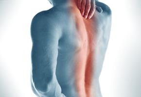 body-spine