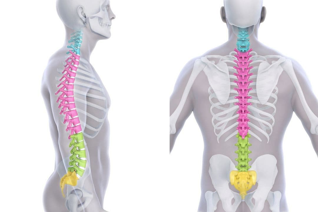 Healthy spine curves